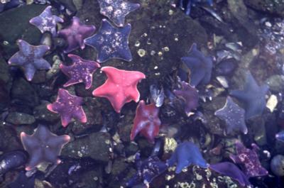 <strong><font size=4>*/ En el camino de las estrellas marinas ...</strong></font>