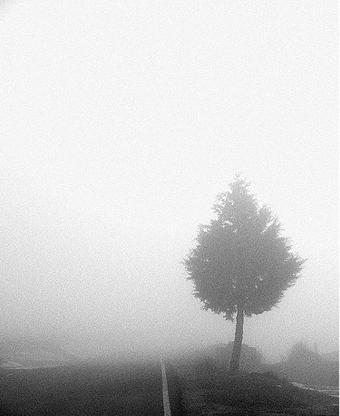<strong><font size=4>*/ La niebla que somos ...</strong></font>