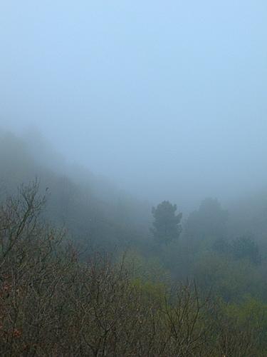 niebla en nuestra ventana