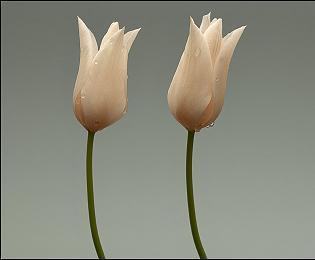 <strong><font size=4>*/ Como una flor ...</strong></font>